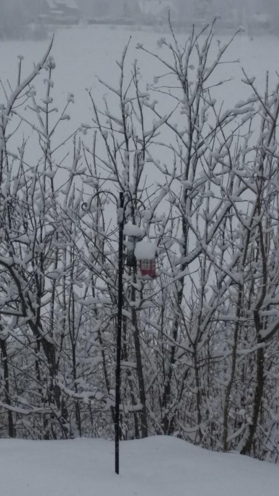 Vinterlandet Norge